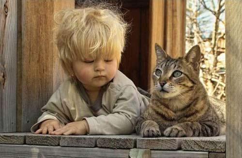 Adoptez la psychologie du chat !