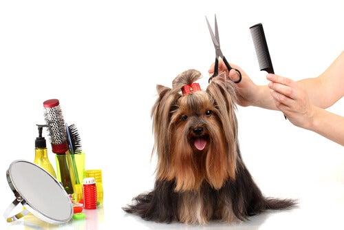 Astuces et conseils pour brosser votre chien