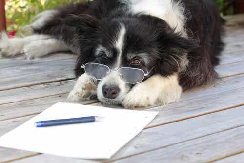 L'arthrose canine : diagnostic et prévention