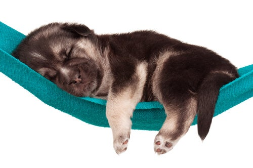 Les rêves des chiens : avez-vous déjà regardé votre chien dormir ?