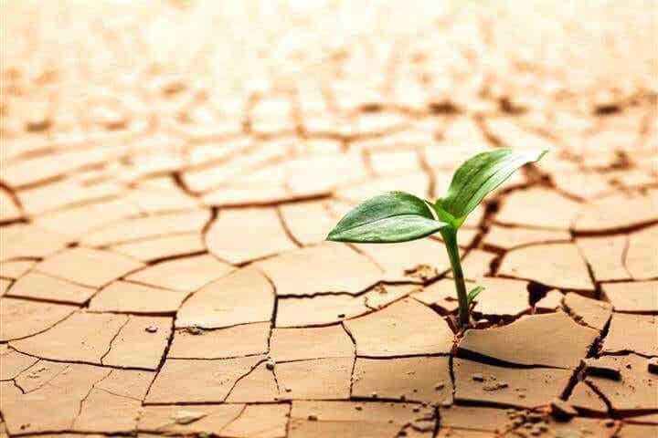 Les obstacles nous rendent plus forts