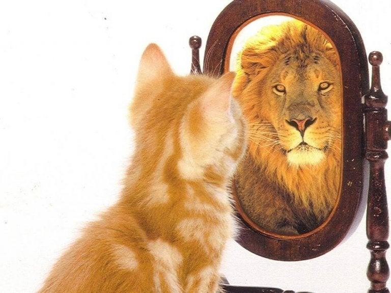 L'estime de soi et l'égo