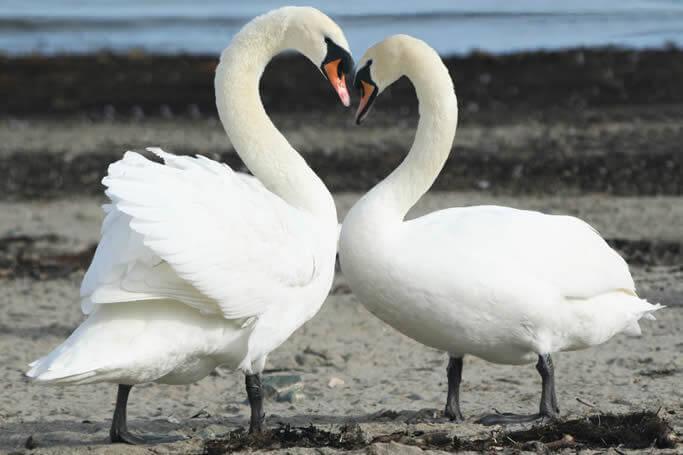 Construire une relation de couple durable