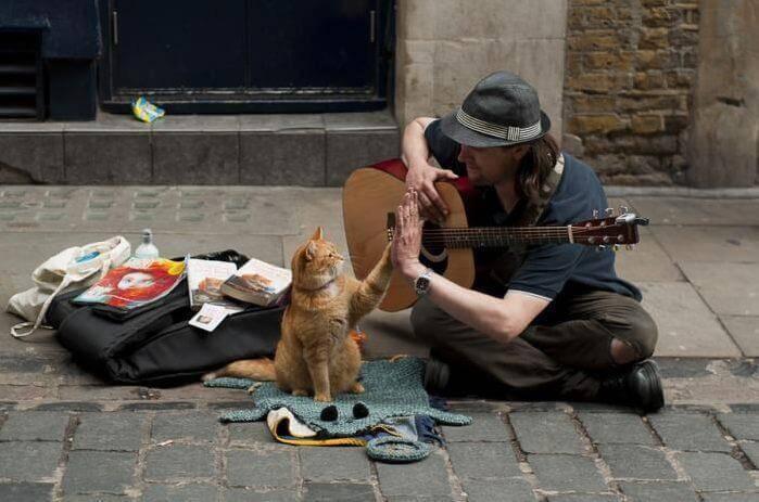 Les animaux de compagnie, les petits maîtres du soutien affectif