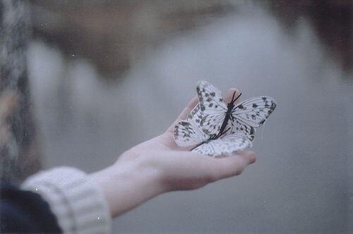 papillon-volant