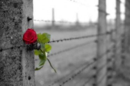Le-nom-de-la-rose-420x277