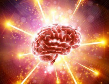 cerveau-420x324
