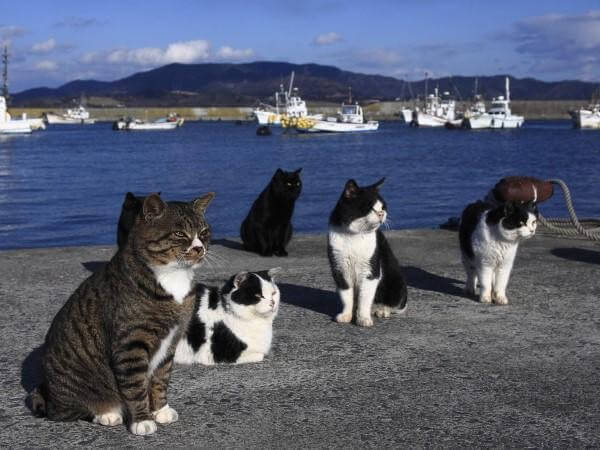 L'île des chats