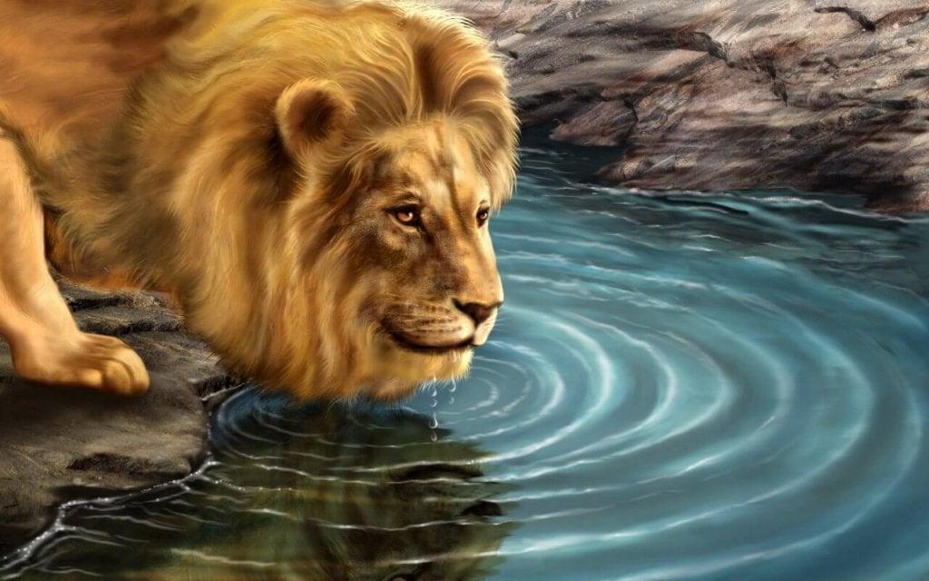 L'histoire du lion et de son reflet