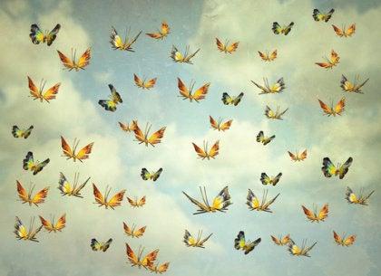papillons-shutterstock_270432002-420x305