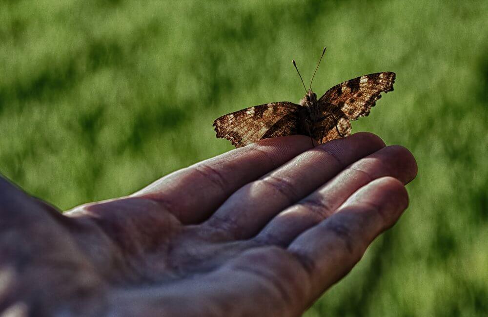 Que ne doit-on pas faire pour aider les autres ? (L'histoire de l'homme et du papillon)