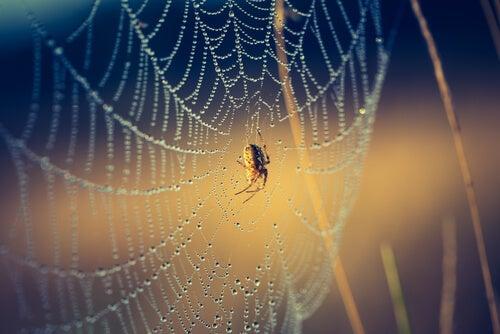 Las 6 pattes de mon araignée, mon épanouissement personnel