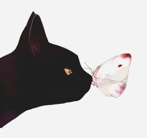 chat-papillon