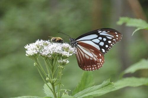 Volez comme un papillon et piquez comme une abeille