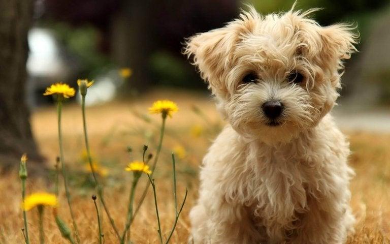 Les chiens ne meurent jamais, ils dorment près de votre cœur
