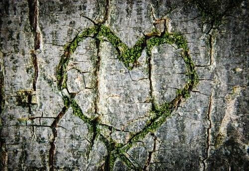 Coeur-verre-arbre