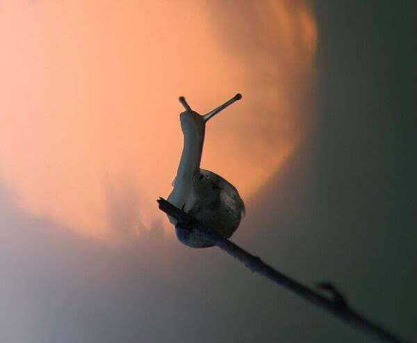 Escargot-sur-une-branche