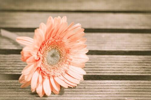 Fleur-sur-sol-en-bois