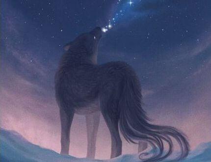 loup dans la nuit