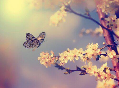 Mariposa-volando-cerca-de-un-arbol