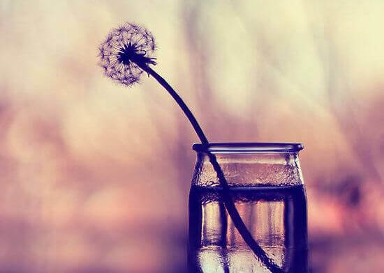 Pissenlit-dans-vase-en-verre
