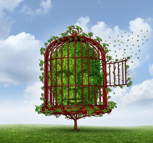 cabeza-de-arbusto-encerrada-en-una-jaula