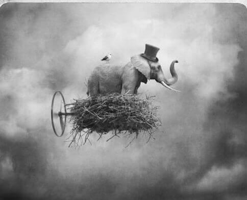elephant sur un nuage