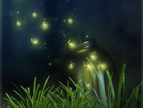 lucioles dans la nuit
