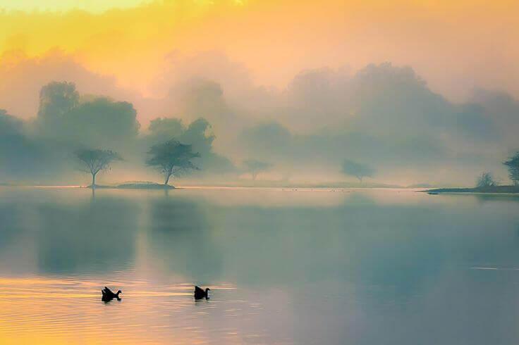 paysage avec du brouillard et deux cygnes