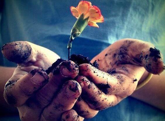 Mains-tenant-une-fleur