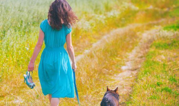 camino-perro