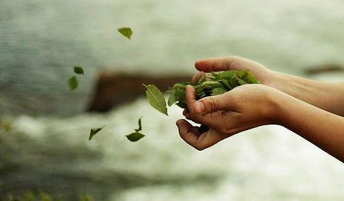 mano-con-hojas