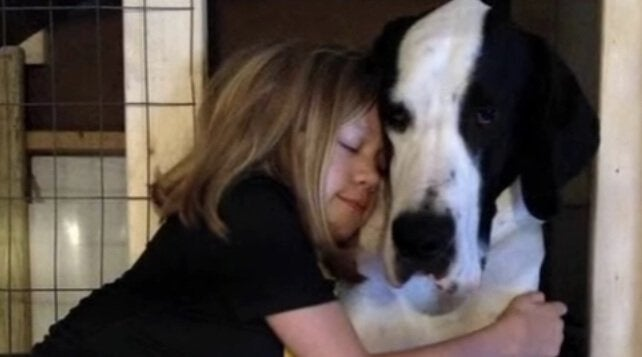 perro-gran-danés-george-niña-bella-3