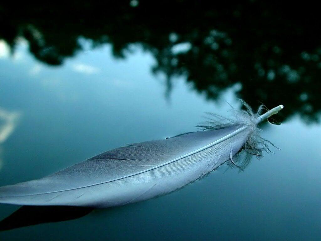 plume sur l'eau