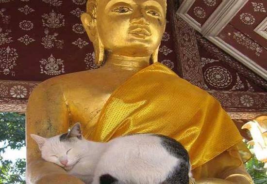 Chat-statue-bouddha