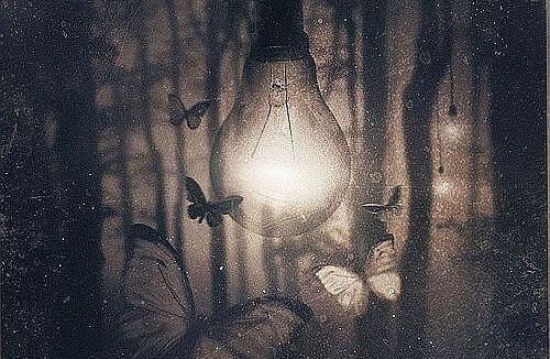 Papillons-dans-une-clairiere
