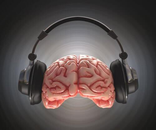 cerveau ecoutant de la musique