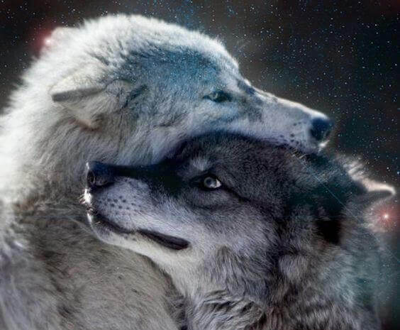 lobos-grises