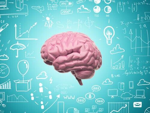 Grâce à notre neuroplasticité, nous ne cessons jamais d'apprendre
