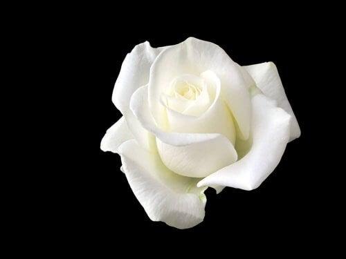 Sophie Scholl, la jeune femme qui fit face à Hitler avec une rose blanche