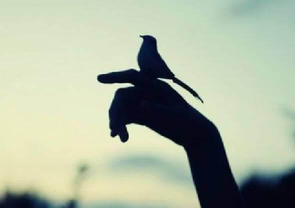 Main-et-oiseau