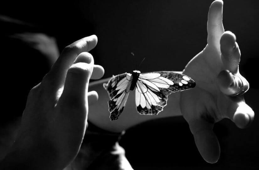 Papillon-entre-deux-mains