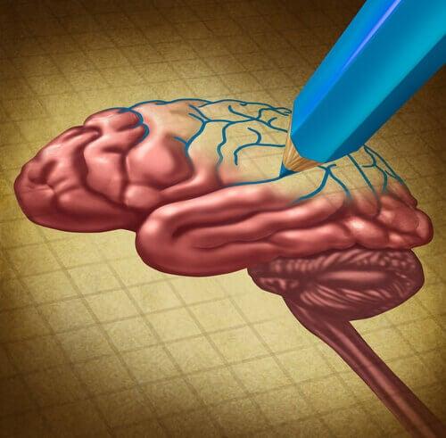 Stylo-dessinant-un-cerveau