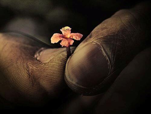 doigts-et-fleur