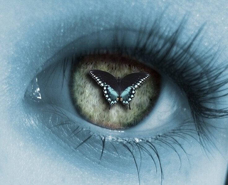 regard-papillon-pour-changer-notre-vision-des-autres