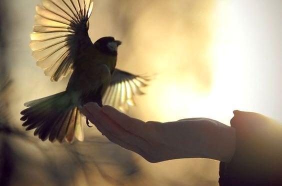 Main-relachant-un-oiseau