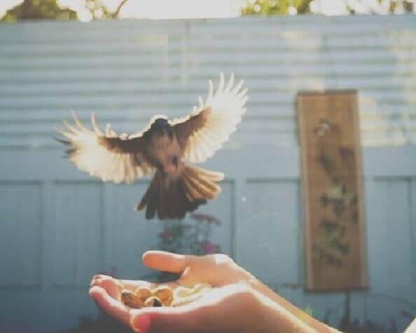 Oeufs-dans-la-main-oiseaux-volant