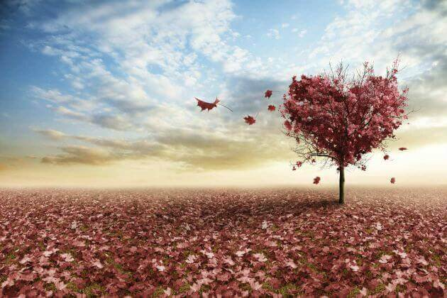 arbre-en-forme-de-coeur
