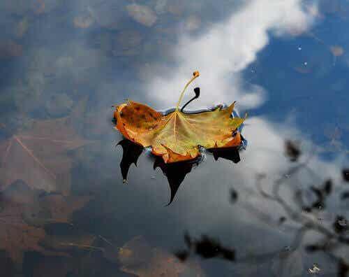 Apprenez de l'automne, laissez tomber vos peines