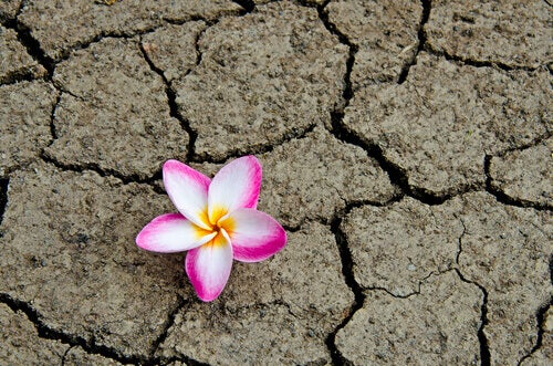fleur-terre-seche